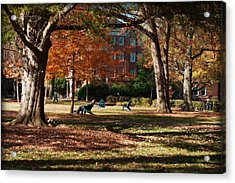 Catching Rays - Davidson College Acrylic Print by Paulette B Wright