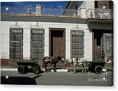 Horses Catching Up In Cuba Acrylic Print