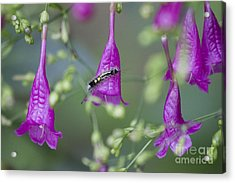 Caterpillar Playground  Acrylic Print by Nola Lee Kelsey