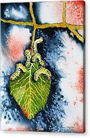 Caterpillars Acrylic Print