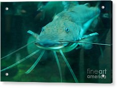 Catfish Billy Acrylic Print