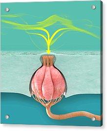 Catfish Taste Bud Acrylic Print by Claus Lunau