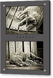Catnap Acrylic Print by Greg Jackson
