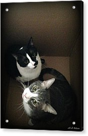 Cats In The Box Acrylic Print