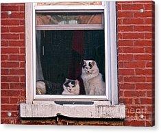Cats On A Sill Acrylic Print by Randi Shenkman