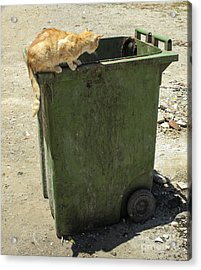 Cats On And In Garbage Container Acrylic Print by Patricia Hofmeester