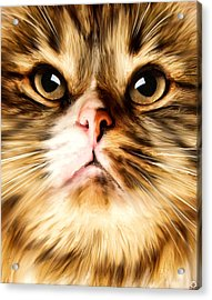 Cat's Perception Acrylic Print by Lourry Legarde