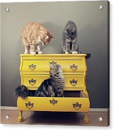 Cats Sitting On Cabinet Acrylic Print