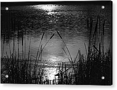 Cattails 3 Acrylic Print