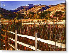 Cattails And Color-2 Acrylic Print by Nancy Marie Ricketts