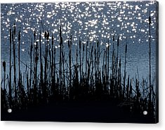 Cattails And Sparkle Acrylic Print