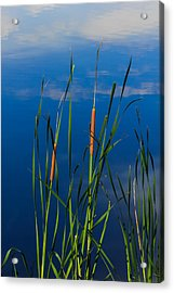 Cattails At Overholster Acrylic Print by Doug Long