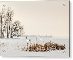 Cattails By The Shore In Winter Acrylic Print