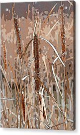 Cattails In The Fall Acrylic Print