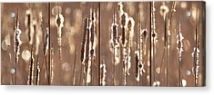 Cattails In The Light Acrylic Print by Leda Robertson