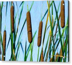 Cattails Acrylic Print by Tom Mc Nemar