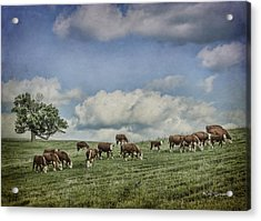 Cattle Grazing Acrylic Print by Jeff Swanson