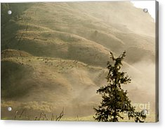 Cattle On Hillside 1.7138 Acrylic Print by Stephen Parker