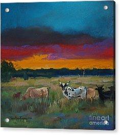Cattle's Cadence Acrylic Print