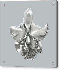Cattleya I - Sweet Dreams Acrylic Print
