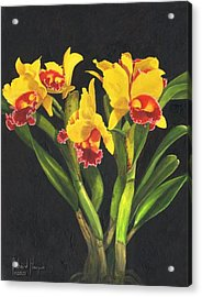 Cattleya Orchid Acrylic Print by Richard Harpum
