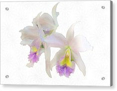 Cattleya Orchids Softly Acrylic Print by Rosalie Scanlon
