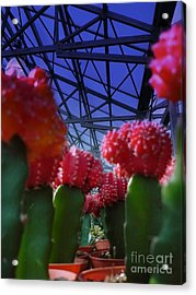 Catusflower Acrylic Print by Susan Townsend