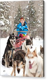 Caucasian Child Sits In Siberian Husky-drawn Sled Acrylic Print by ImagineGolf
