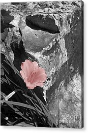 Caught Between A Rock And A Hard Place Acrylic Print by Janice Westerberg