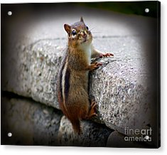 Caught In The Act Acrylic Print