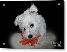 Caught In The Act Acrylic Print by Terri Waters