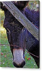 Caught In The Web Acrylic Print