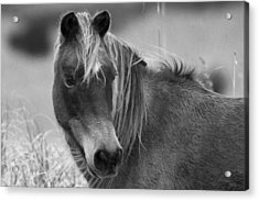 Caught My Eye Acrylic Print by Betsy Knapp