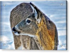 Acrylic Print featuring the photograph Cautious Deer by Trey Foerster