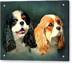Cavalier King Charles Acrylic Print by Diana Angstadt