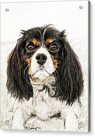 Cavalier King Charles Spaniel Painting Acrylic Print