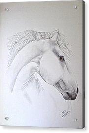 Cavallo Acrylic Print