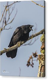 Caw Acrylic Print by Charlie Duncan