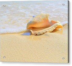Cayman Conch #2 Acrylic Print