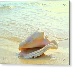 Cayman Conch #3 Acrylic Print