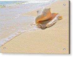 Cayman Conch #4 Acrylic Print