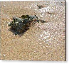 Cayman Conch #5 Acrylic Print