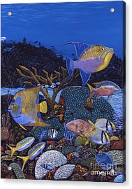 Cayman Reef 1 Re0021 Acrylic Print by Carey Chen