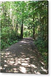 Acrylic Print featuring the photograph Cedar Shadow Steps by Kim Prowse