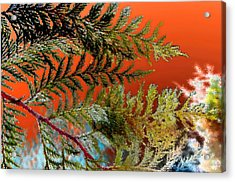 Acrylic Print featuring the photograph Cedar Canvas by Gwyn Newcombe