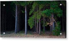 Cedar Acrylic Print by Tim Nichols