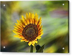 Celebrating The Sunlight Acrylic Print