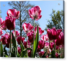 Acrylic Print featuring the photograph Celebration Of Spring by John Freidenberg