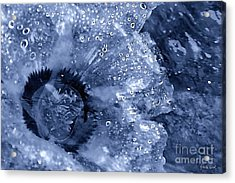 Cellophane Flower- Sapphire Acrylic Print by Darla Wood