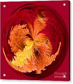 Celosia On Fire Acrylic Print